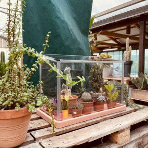 Serretta per cactus